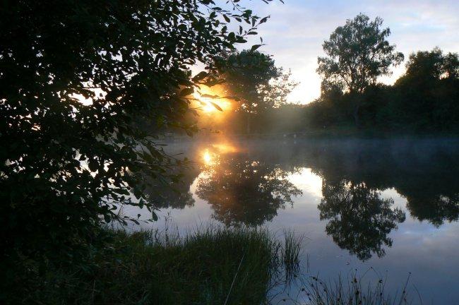 Soleil levant sur l'étang
