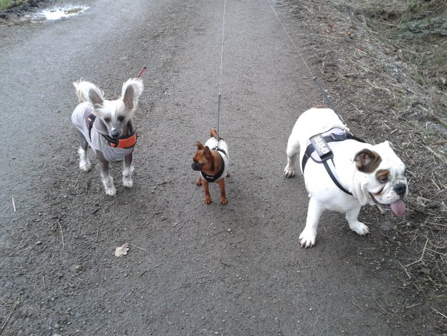 Dobby, Lilha, Violette