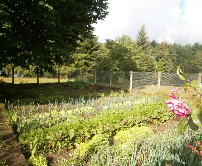 Location chalet etang flayat ext rieur for Chalet exterieur jardin