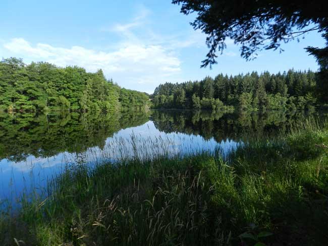 Un magnifique étang, idéal pour la pêche