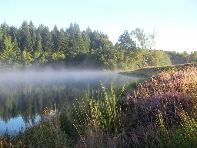 L'étang sous une légère brume